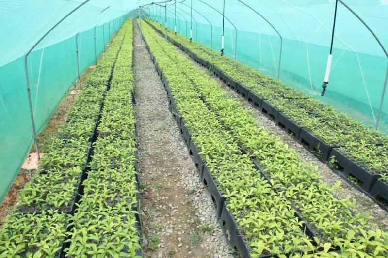 Vivero de proyecto de reforestaci n en chirinos trabaja for Proyecto productivo de vivero forestal